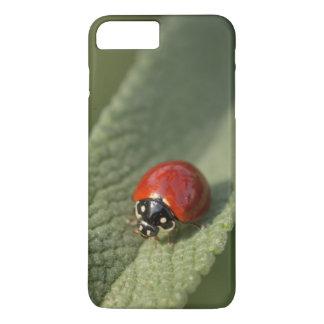 Coque iPhone 7 Plus Scarabée de coccinelle convergent sur la sauge de