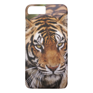 Coque iPhone 7 Plus Tigre de Bengale, Panthera le Tigre