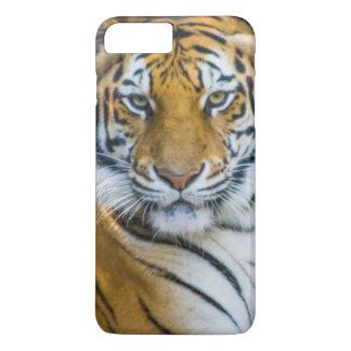 Coque iPhone 7 Plus Tigre de Bengale (Panthera Tigre Tigre)