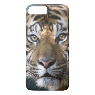 Coque iPhone 7 Plus Tigre masculin de Sumatran (sumatrae du Tigre de