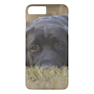 Coque iPhone 7 Plus Un chiot de labrador retriever