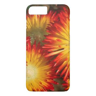 Coque iPhone 7 Plus Usines de glace (Lampranthus doré) en fleur