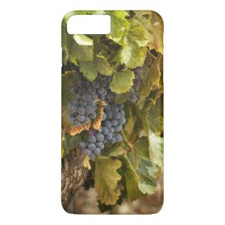 Coque iPhone 7 Plus Vignobles au coucher du soleil