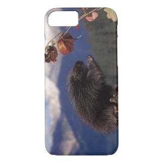 Coque iPhone 7 Porc-épic commun mangeant la haute brosse d'Alaska
