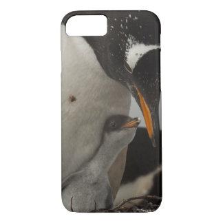 Coque iPhone 7 Poussin de alimentation de pingouin de Gentoo