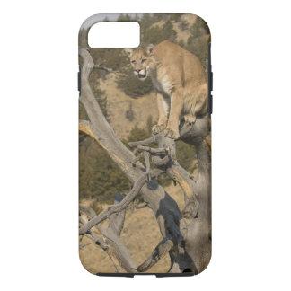 Coque iPhone 7 Puma, aka puma, puma ; Concolor de puma, 2