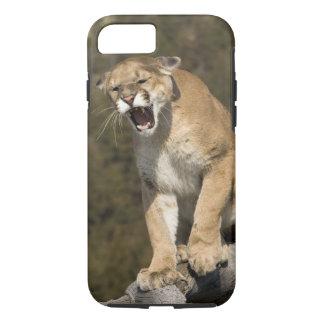 Coque iPhone 7 Puma ou puma, concolor de puma, captif -