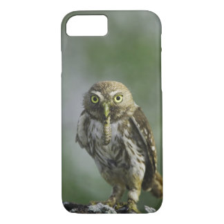 Coque iPhone 7 Pygmée-Hibou ferrugineux, brasilianum de