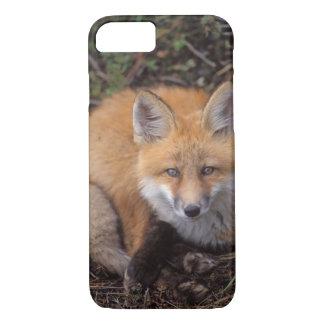 Coque iPhone 7 renard rouge, vulpes de Vulpes, dans des couleurs