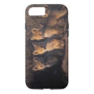 Coque iPhone 7 renard rouge, vulpes de Vulpes, kits en dehors de