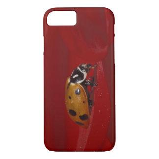 Coque iPhone 7 Scarabée de coccinelle. (Convergens de Hippodamia)
