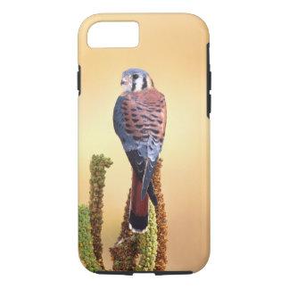 Coque iPhone 7 Sparverius de crécerelle, de Falco, indigènes aux