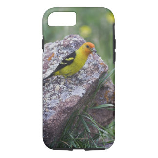 Coque iPhone 7 Tanager occidental, ludoviciana de Piranga, mâle