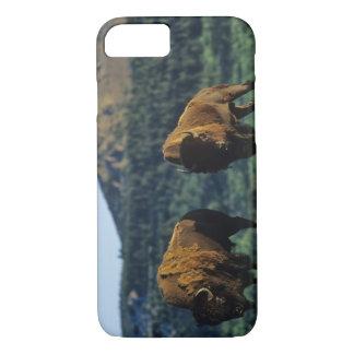 Coque iPhone 7 Taureaux de bison au parc national de lacs