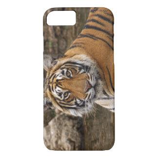 Coque iPhone 7 Tigre de Bengale royal dans l'étang de jungle,