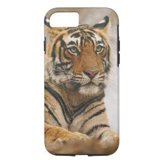 Coque iPhone 7 Tigre de Bengale royal sur la roche, Ranthambhor