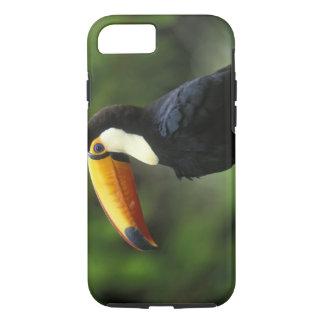Coque iPhone 7 Toucan de Toco, (toco de Ramphastos),