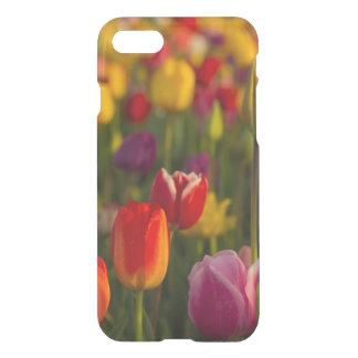Coque iPhone 7 Tulipes, festival de tulipe, Woodburn, Orégon,