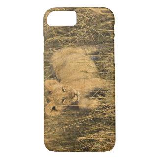 Coque iPhone 7 Un petit animal de lion s'étendant dans le buisson