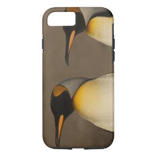 Coque iPhone 7 Une paire du Roi pingouins (Aptenodytes P.