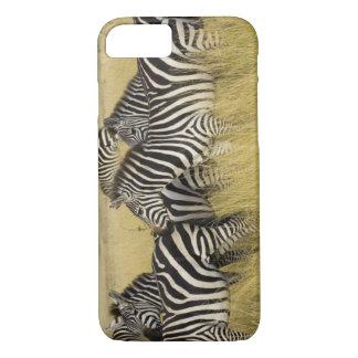 Coque iPhone 7 Zèbre de plaines (quagga d'Equus) dans l'herbe,