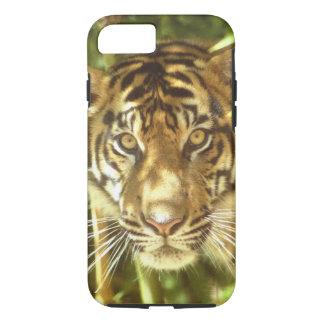 Coque iPhone 7 Zoo de la Californie, San Francisco, tigre de
