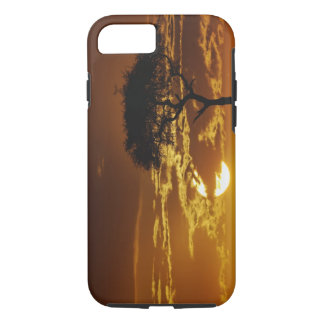 Coque iPhone 8/7 Acacia d'épine de parapluie, tortilis d'acacia,