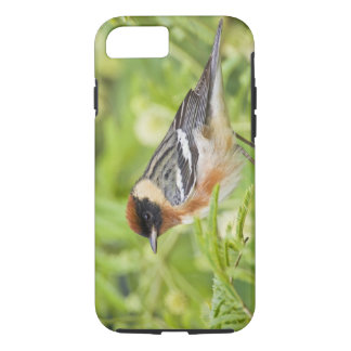 Coque iPhone 8/7 Adulte de fauvette de Baie-breasted (castanea de