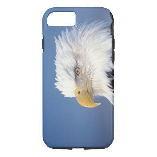 Coque iPhone 8/7 aigle chauve, leuccocephalus de Haliaeetus,
