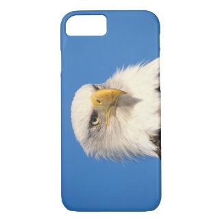 Coque iPhone 8/7 aigle chauve, leuccocephalus de Haliaeetus, 2