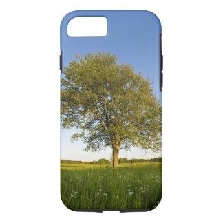Coque iPhone 8/7 Arbre d'érable solitaire dans le domaine de foin à