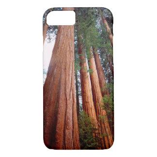 Coque iPhone 8/7 Arbres de séquoia de séquoia de peuplement vieux