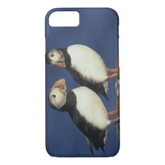 Coque iPhone 8/7 Arctica de macareux atlantique, de Fratercula),