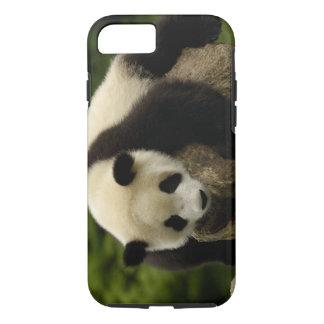 Coque iPhone 8/7 Bébé de panda géant (melanoleuca d'Ailuropoda) 4