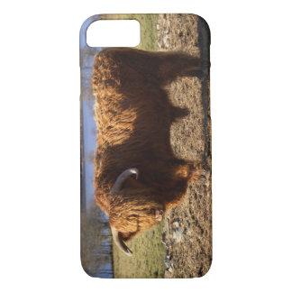 Coque iPhone 8/7 Bétail des montagnes Taureau, Ecosse