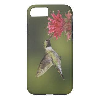 Coque iPhone 8/7 Breit-angebundener Kolibri, Selasphorus 2