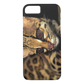 Coque iPhone 8/7 CA, Panama central, Soberania NP, Margay 2