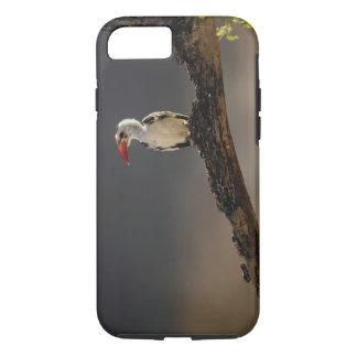 Coque iPhone 8/7 calao Rouge-affiché, erythrochynchus de Tockus,