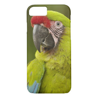 Coque iPhone 8/7 CAPTIF militaire d'ara (militaris d'arums).