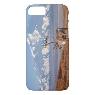 Coque iPhone 8/7 caribou, tarandus de Rangifer, taureau dans des