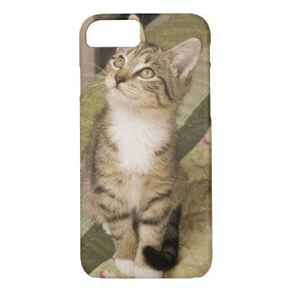 Coque iPhone 8/7 Chat tigré argenté sur le couvre-lit