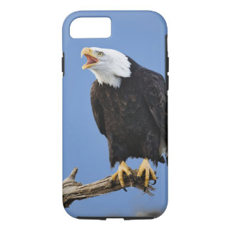 Coque iPhone 8/7 Chauve d'Eagle appelant, Homer, Alaska, Haliaetus