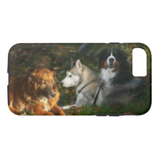 Coque iPhone 8/7 Chien de montagne de Bernese, Belge Shep de chien