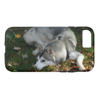 Coque iPhone 8/7 Chien de traîneau sibérien au repos