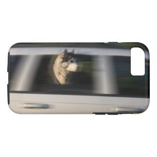 Coque iPhone 8/7 Chien de traîneau sibérien dans le cas mobile de