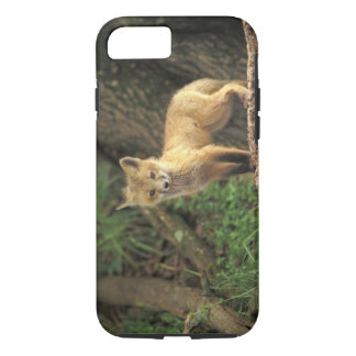 Coque iPhone 8/7 Chiot de Fox rouge devant le repaire (vulpes de
