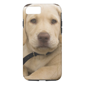 Coque iPhone 8/7 Chiot de labrador retriever