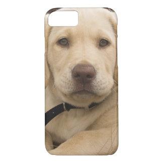 Coque iPhone 8/7 Chiot de labrador retriever