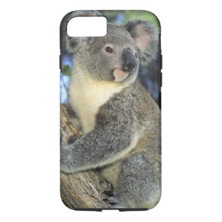 Coque iPhone 8/7 Cinereus de koala, de Phascolarctos), l'Australie,