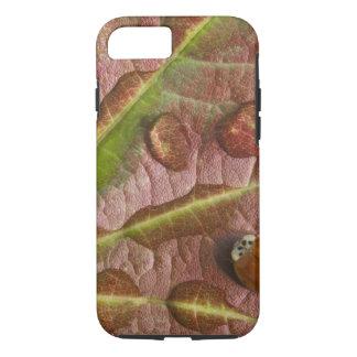 Coque iPhone 8/7 Coccinelle sur la feuille d'érable couverte de